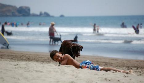 Dog friendly beaches Spain