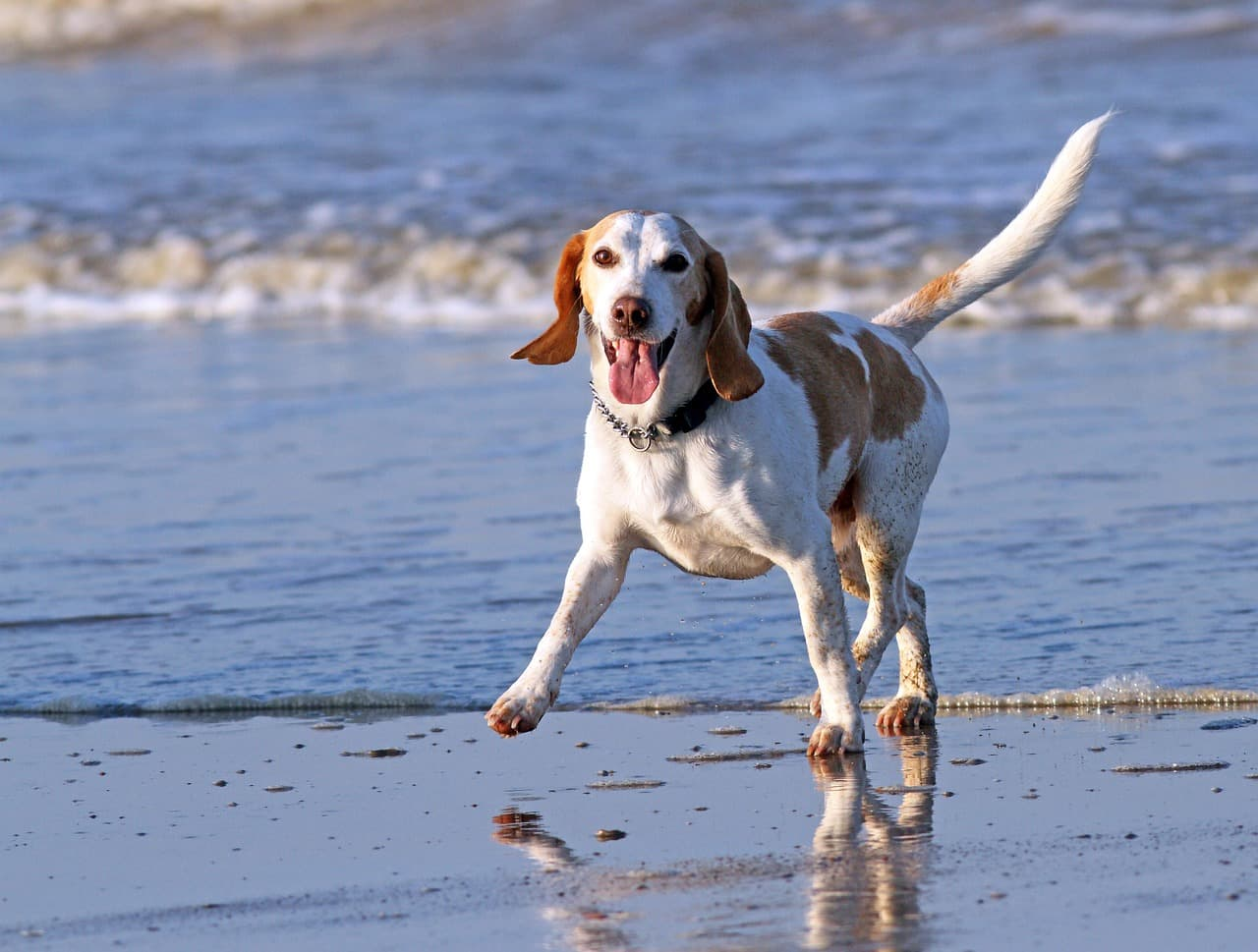 What can I do if my dog contracts Leishmaniasis?