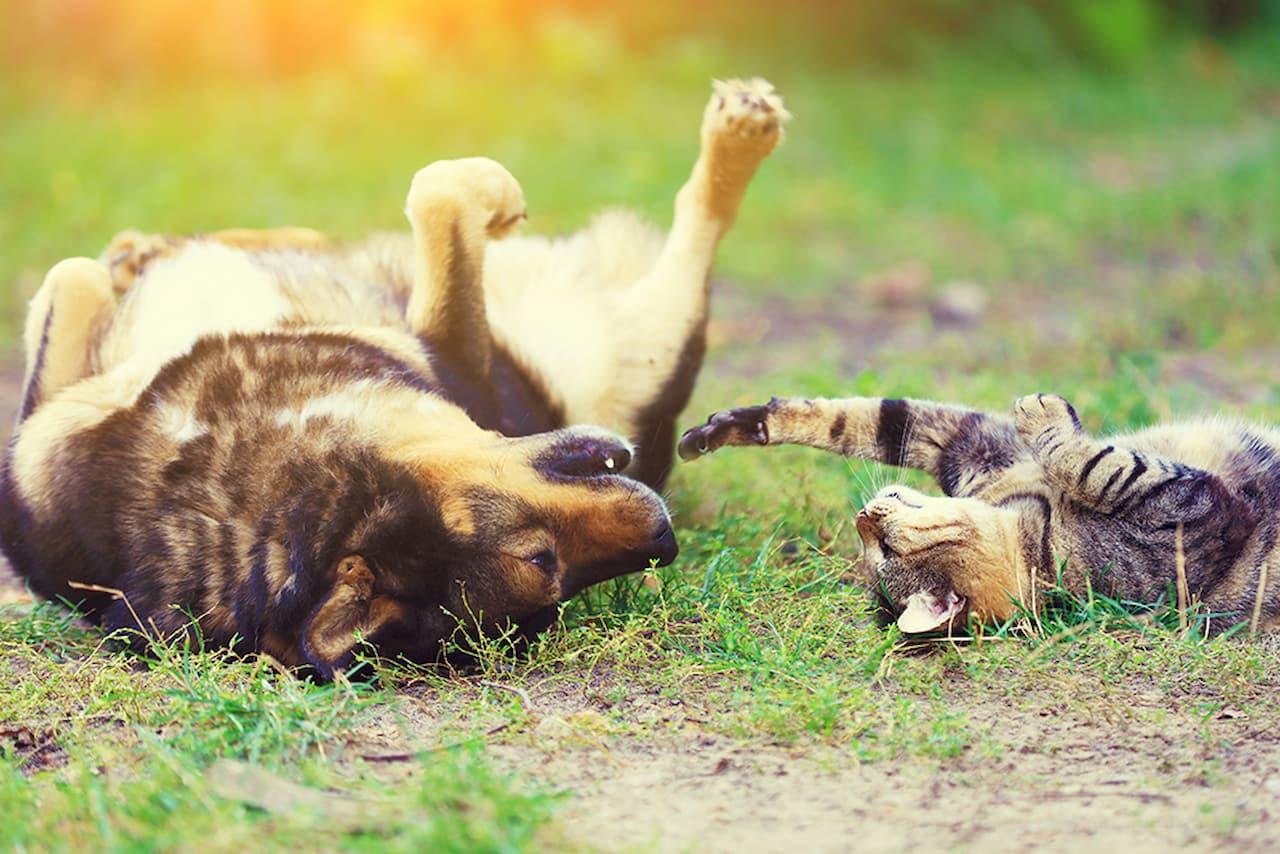 Natural repellents for cats