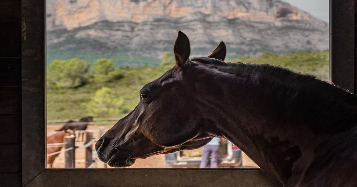 Vall de Cavall